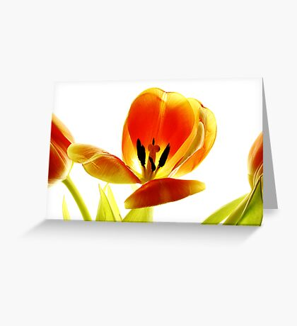orange tulip #1 Greeting Card