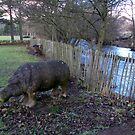 A Lonely Hippo by biddumy