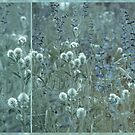Fragrance of Sage by VallaV