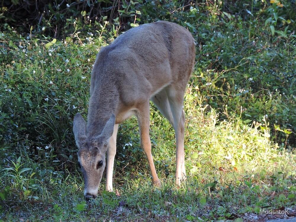 Grazing deer by MorisatoK
