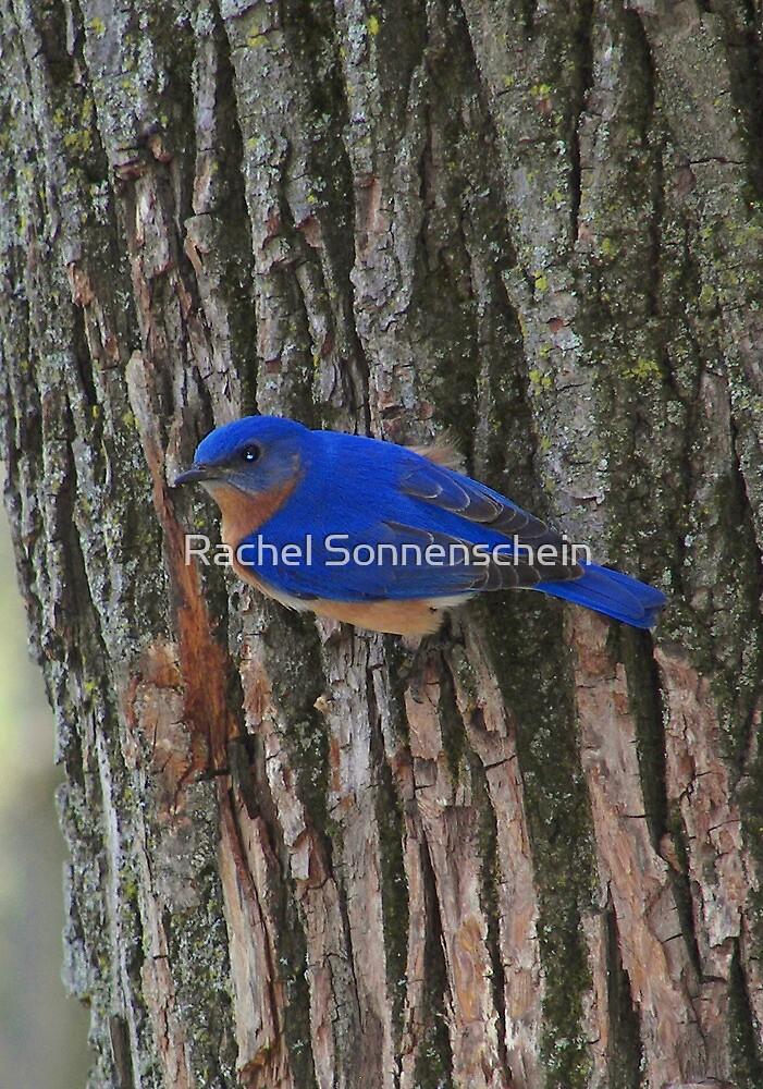 So Blue by Rachel Sonnenschein