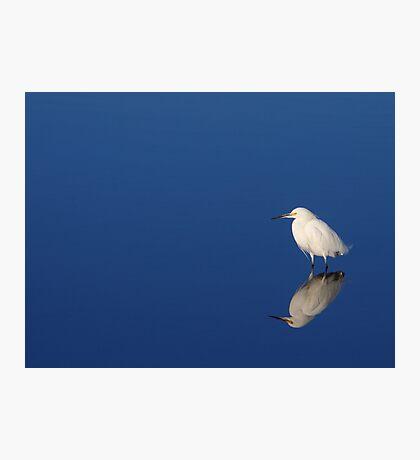 Snowy Egret Blues II Photographic Print