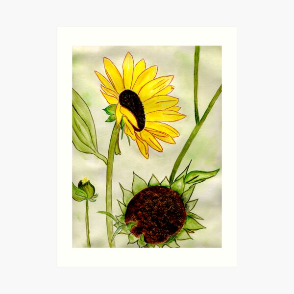 Warm Sunny Flowers Art Print