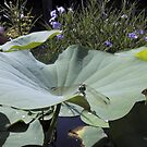 Dragonfly on Lotus Leaf by May Lattanzio