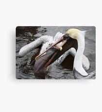 I WANT That Fish !! Canvas Print