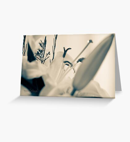 Lily Stamen Greeting Card