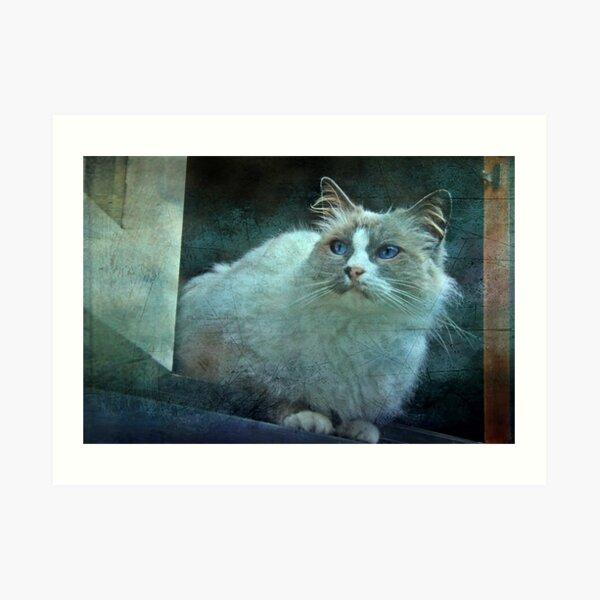 """""""JimBob ,in the WIndow ..."""" Art Print"""