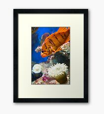 Orange Reef Fish Framed Print