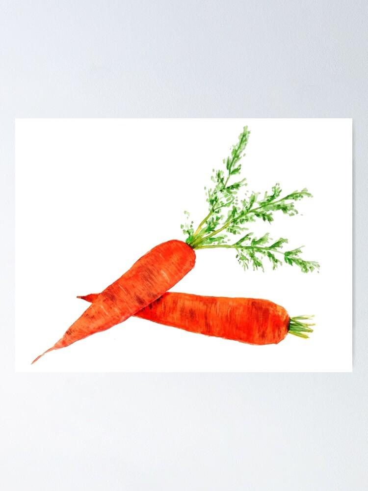 Orange Carrot Watercolor Painting Poster By Colorandcolor Redbubble Es la hortaliza más importante y de mayor consumo de la familia. redbubble