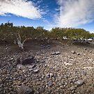 mangroves, roebuck bay by col hellmuth