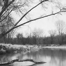Along The River In Winter by MLabuda