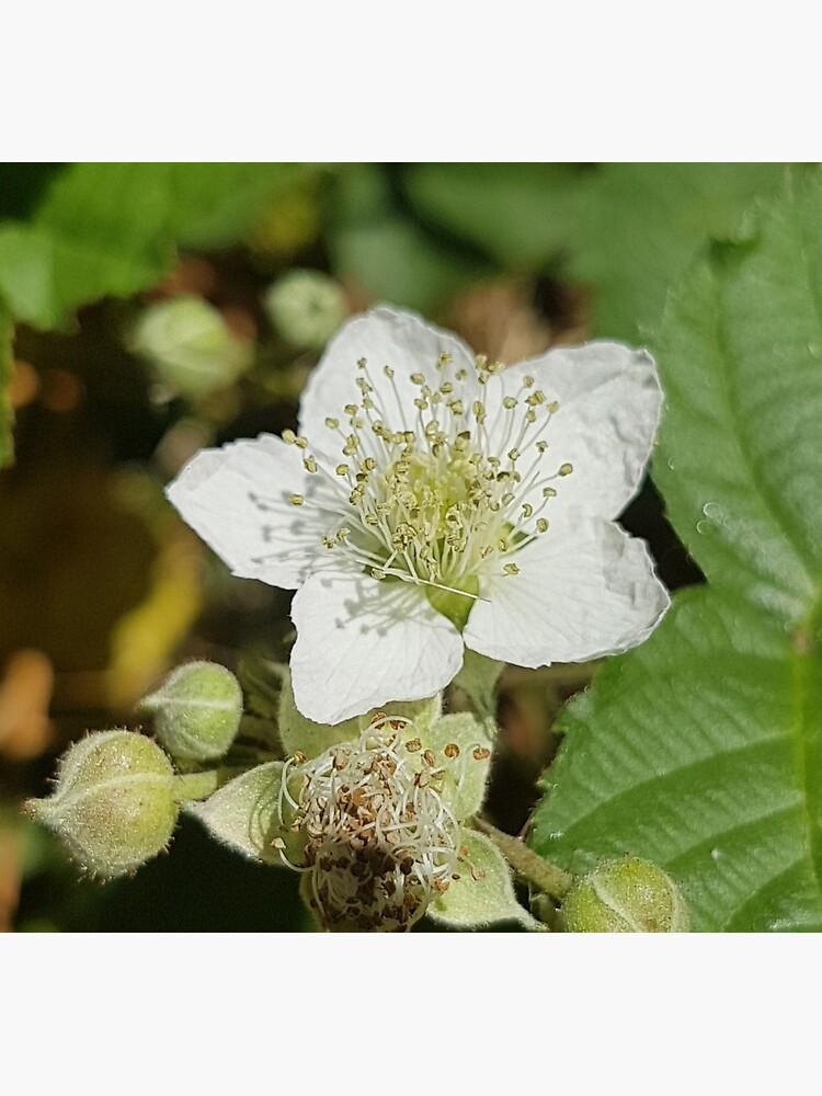 Bramble Blossom by Kim-M-Andrews