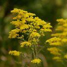 warm golden sunshine by Trina King