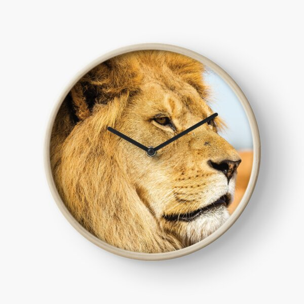 Big lion looking far away Clock