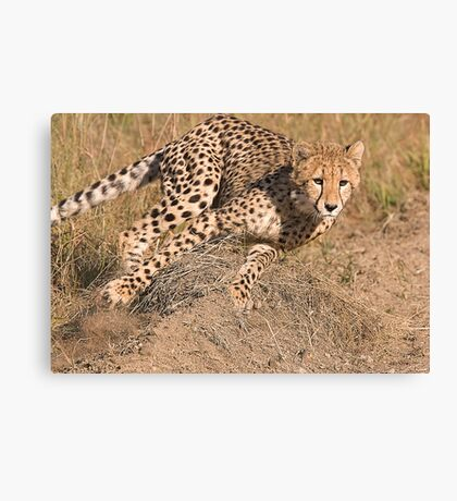 The Chase Begins Canvas Print
