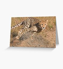 The Chase Begins Greeting Card