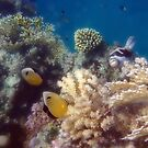 Amazing And Thrilling Red Sea Underwater World by hurmerinta