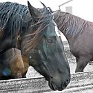 Horse Appeal by kdg2day