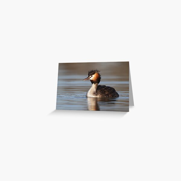 Great Crested Grebe - Lake Bindegolly Greeting Card