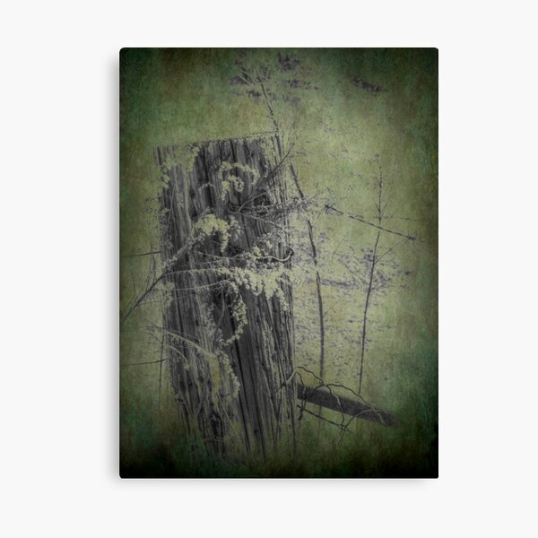 Of Wood and Wire ll Canvas Print