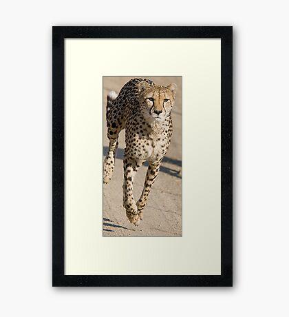 Cheetah On the Run Framed Print