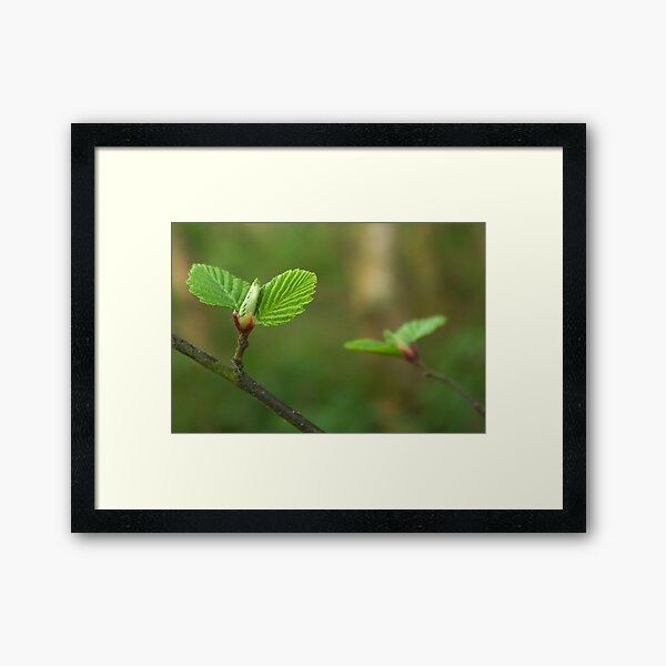 Spring comes gently Framed Art Print