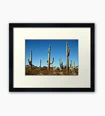 Mighty Saguaro  Framed Print