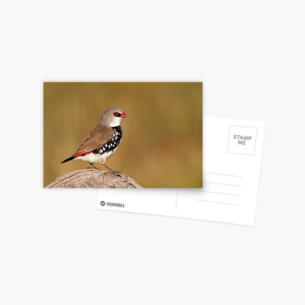 Diamond Firetail Postcard