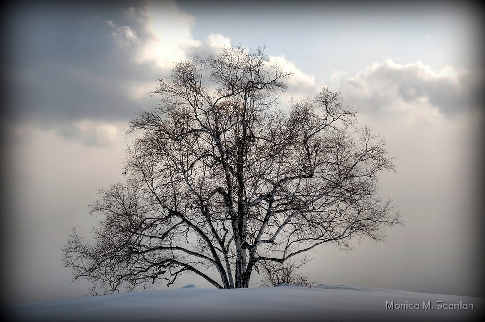 One Tree Hill by Monica M. Scanlan