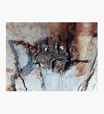 The Israeli Forest Spider Photographic Print