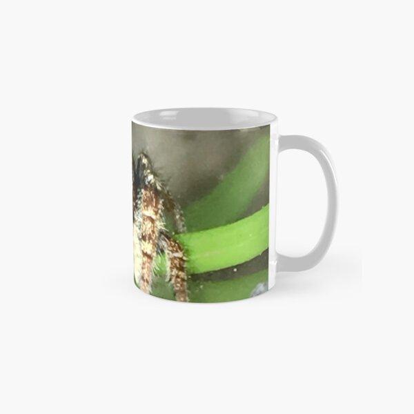Phidippus whitmani Jumping Spider Classic Mug