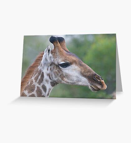 Young Male Giraffe Greeting Card