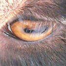 I See You Ma, Goat's Eye by MaeBelle