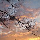 FEBRUARY:  GUM TREE BRANCH AT SUNSET by May Lattanzio