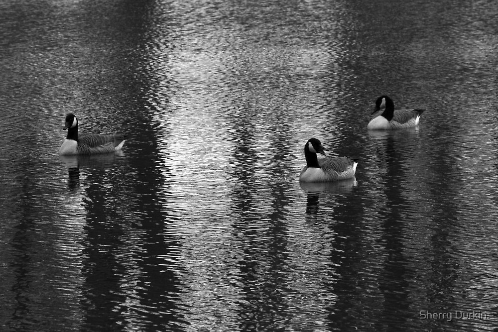Geese at Lake by Sherry Durkin