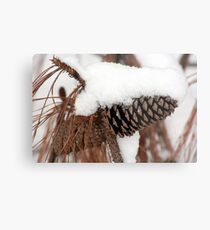 Pine Cone and Snow Metal Print