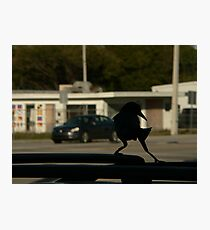 tip toe . on the suv Photographic Print