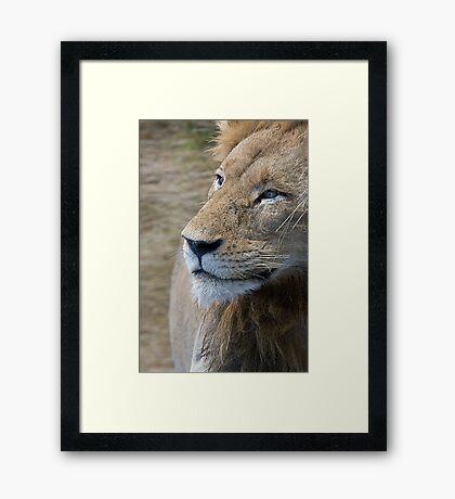 Lion Profile Framed Print