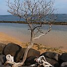 Tree at Baby Beach by Barbara Morrison