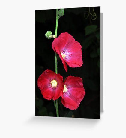 Beerenberg Bloom Greeting Card