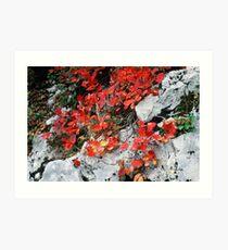 Plitvice Lakes - Croatia Art Print