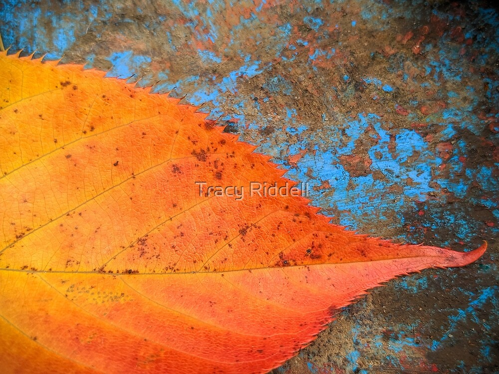 Autumn Leaf 2 by Tracy Riddell