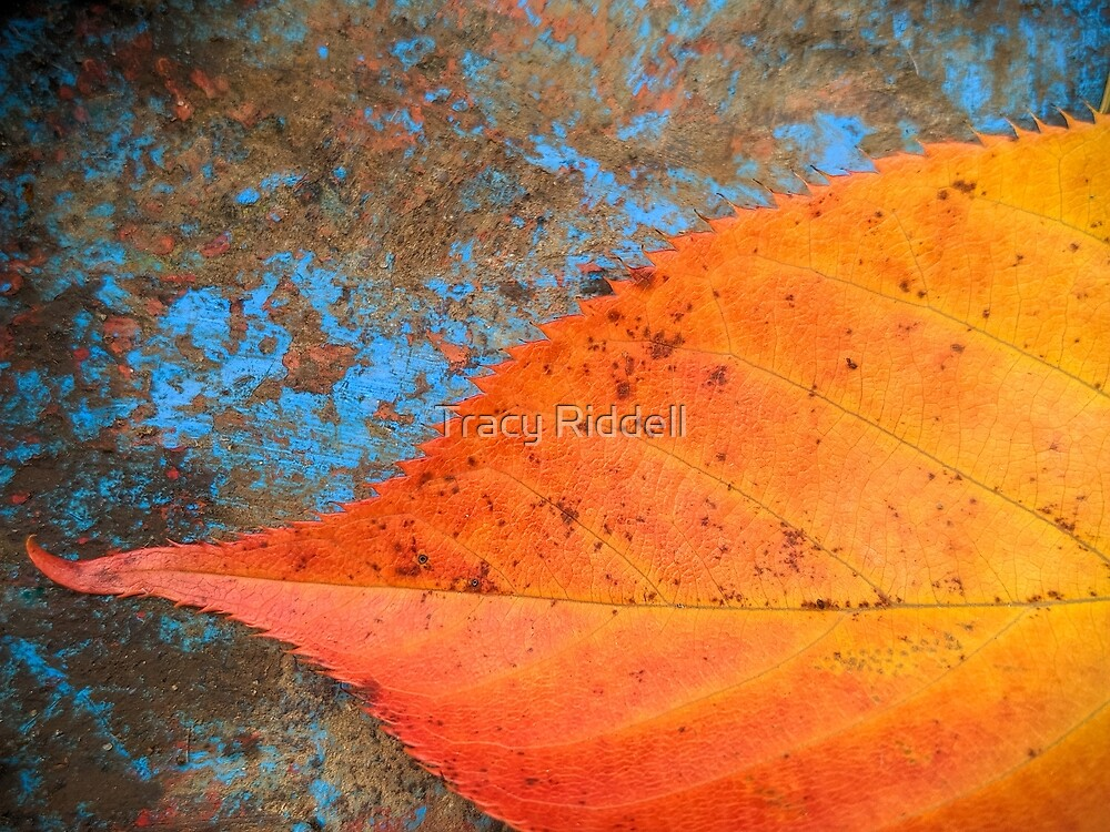 Autumn Leaf 1 by Tracy Riddell