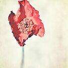 Poppy Pop by Claire Penn