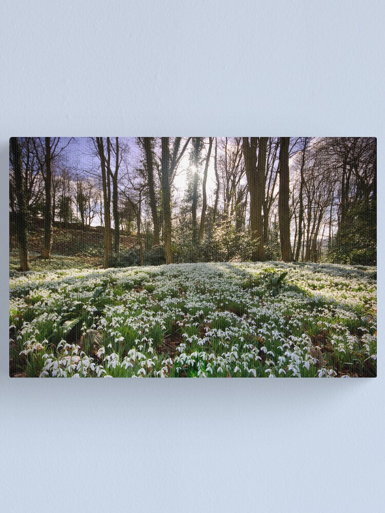 Alternate view of Snowdrop Woods Canvas Print