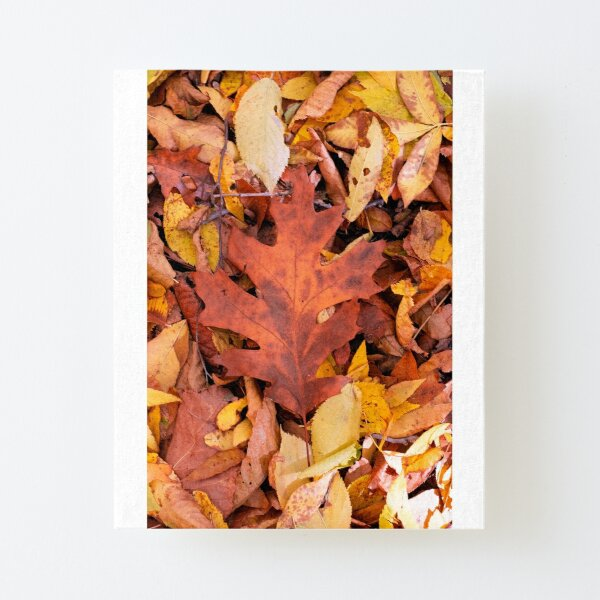 Great Oak Leaf Canvas Mounted Print