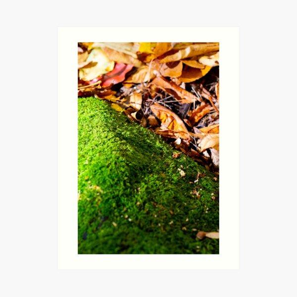 Mount moss I Art Print
