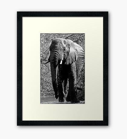 Elephant Spa Framed Print