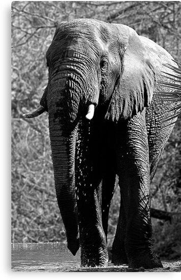 Elephant Spa by Michael  Moss