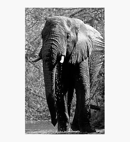 Elephant Spa Photographic Print